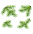 set green pine branch isolated on white lush vector image vector image