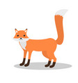 bafox with tail up vector image vector image