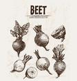 digital detailed line art beet vector image vector image