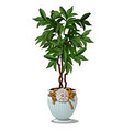 green bush with leaves in decorative white pot vector image vector image