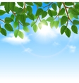 Green leaves and sky background border vector image vector image