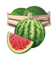 Watermelon harvest in wooden box isolated vector image
