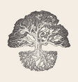old oak tree root system drawn vector image