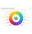 cannabis terpenes horizontal business infographic vector image vector image