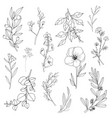 flower and leaf hand draw sketch black and white w vector image vector image