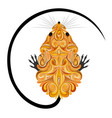 mouse in style cheese vector image