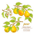 pear set vector image