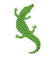 reptile lizard or alligator crocodile top view vector image vector image