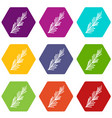 rosemary spice icon set color hexahedron vector image