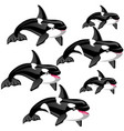 set stages a growing killer whale or vector image