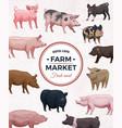 farm market pigs advertising poster vector image