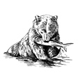 Hand sketch bear catching fish vector image vector image