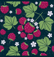 pattern rapsberry 2 vector image vector image