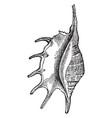pteroceras lambis vintage vector image vector image
