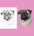 portrait cute funny dog pug vector image