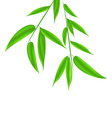 Bamboo leaves pattern with space for your text vector image vector image