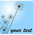 dandelions pale blue vector image vector image