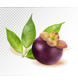ripe mangosteen isolated on transparent background vector image