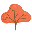 wooden plant with foliage autumn tree vector image vector image