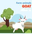 farm animal goat vector image vector image