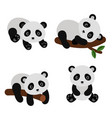 adorable pandas in flat style vector image vector image