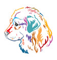 colorful decorative portrait caucasian vector image vector image