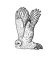 flying owl sketch vector image