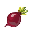 Red beetroot whole isolated on white background vector image