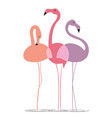 varicoloured flamingos on a white background vector image vector image