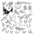 Birds wings set linear silhouette vector image vector image