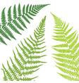 fern leaf background tropical botanical card vector image vector image