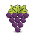 grapes fruit icon image vector image vector image