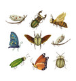 icon set with cute 3d insect vector image
