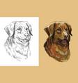 portrait dog toller vector image