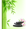 green bamboo and spa stones vector image
