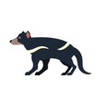 tasmanian devil isolated marsupial wild beast vector image