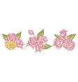 flower bouquet pastel roses vector image