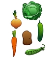 Fresh cartoon healthful isolated vegetables vector image vector image
