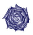 Dark Blue Rose Flower vector image