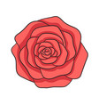 hand drawn red rose isolated on the white vector image