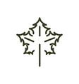 maple leaf foliage nature line design vector image vector image