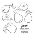 pear set vector image vector image