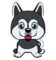 dog alaskan kli kai breed sitting icon flat vector image
