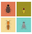 assembly flat bug scarab araneus bee fly vector image vector image