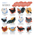 poultry farming chicken breeds icon set flat vector image