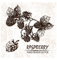 digital detailed raspberry hand drawn vector image vector image