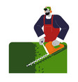 gardener shaping or cutting bushes in garden vector image vector image