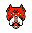 red tiger bulldog head front mascot vector image