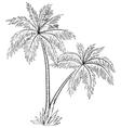 palm trees contours vector image