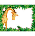 a giraffe in nature frame vector image vector image
